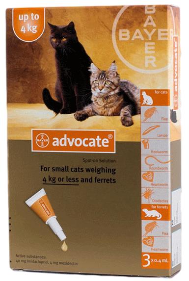 Advocate für Katzen