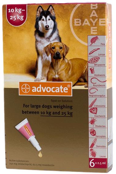 Advocate für grosse Hunde