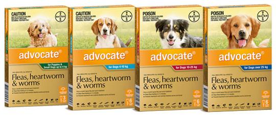 Advocate für Hunde und Katzen