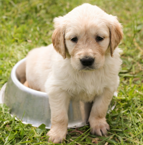 Cute Puppy on lawn
