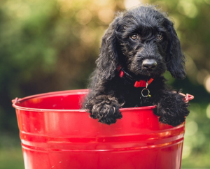 dog in bucket