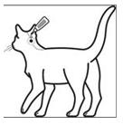 Diagramm: Bravecto für Katzen auftropfen