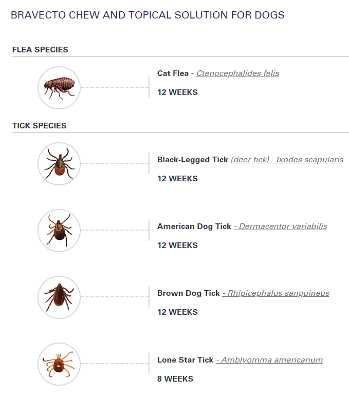 images of fleas and ticks
