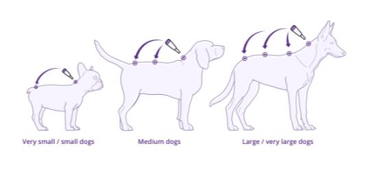 Diagramm: Anwendung von Bravecto für Hunde