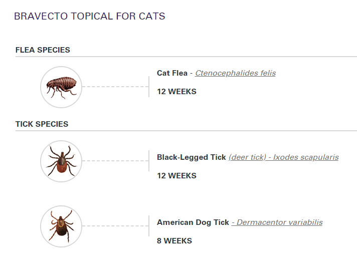 images of cat fleas and ticks