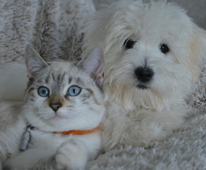 kitty and dog cuddling