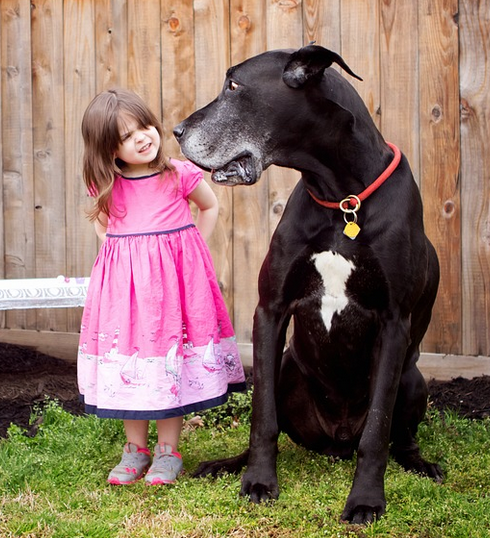great dane with girl