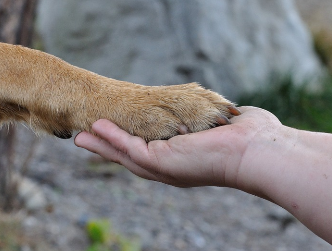 friendship - hand and dog paw