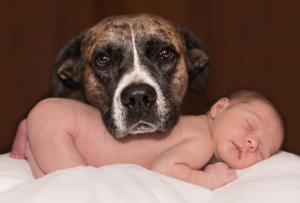 Hund mit Baby