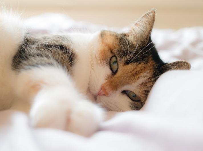 eine Katze auf dem Bett