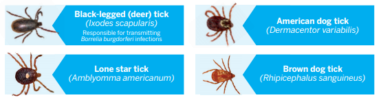 nexgard kills four types of ticks